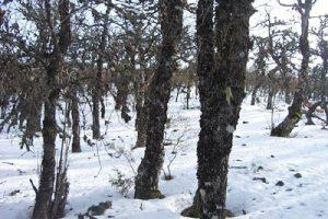 Ancares 2003 nevado